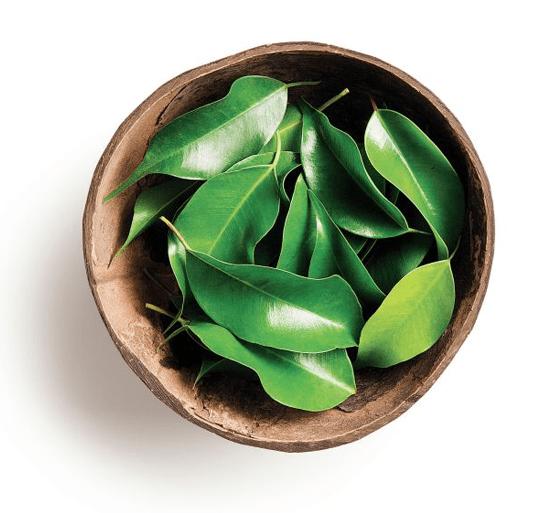 Świeże liście mate verde (zdjęcie Natura Brazil)